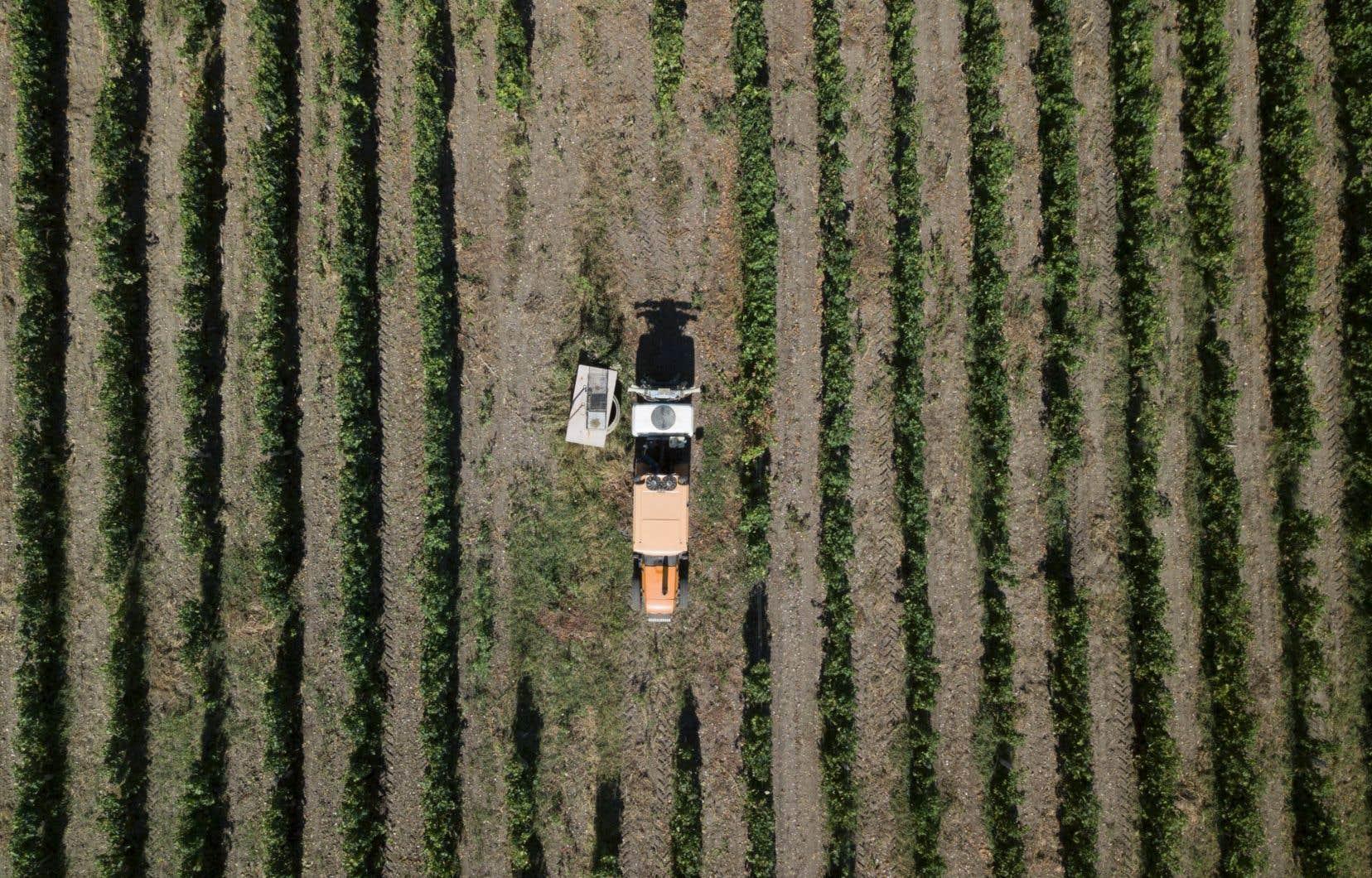 Il serait tout de même un peu court de prétendre que l'emphysème, les troubles thyroïdiens et autres cancers à la carte qui affectent les paysans dans leur vignoble soient liés aux épandages de pesticides et de fongicides dont fait usage l'agriculture dite «conventionnelle». Mais tout de même.