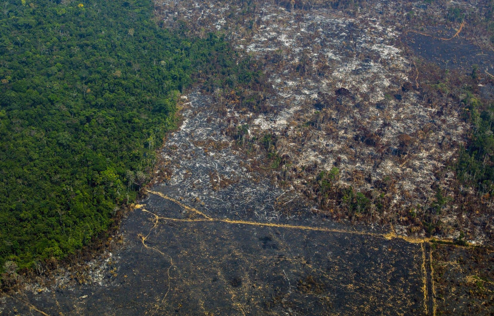 Pour les défenseurs de l'environnement et les spécialistes de l'Amazonie, cette hausse de la déforestation s'explique par la pression exercée sur la forêt par les bûcherons et éleveurs de bétail, encouragés par les prises de position du président d'extrême droite Jair Bolsonaro.