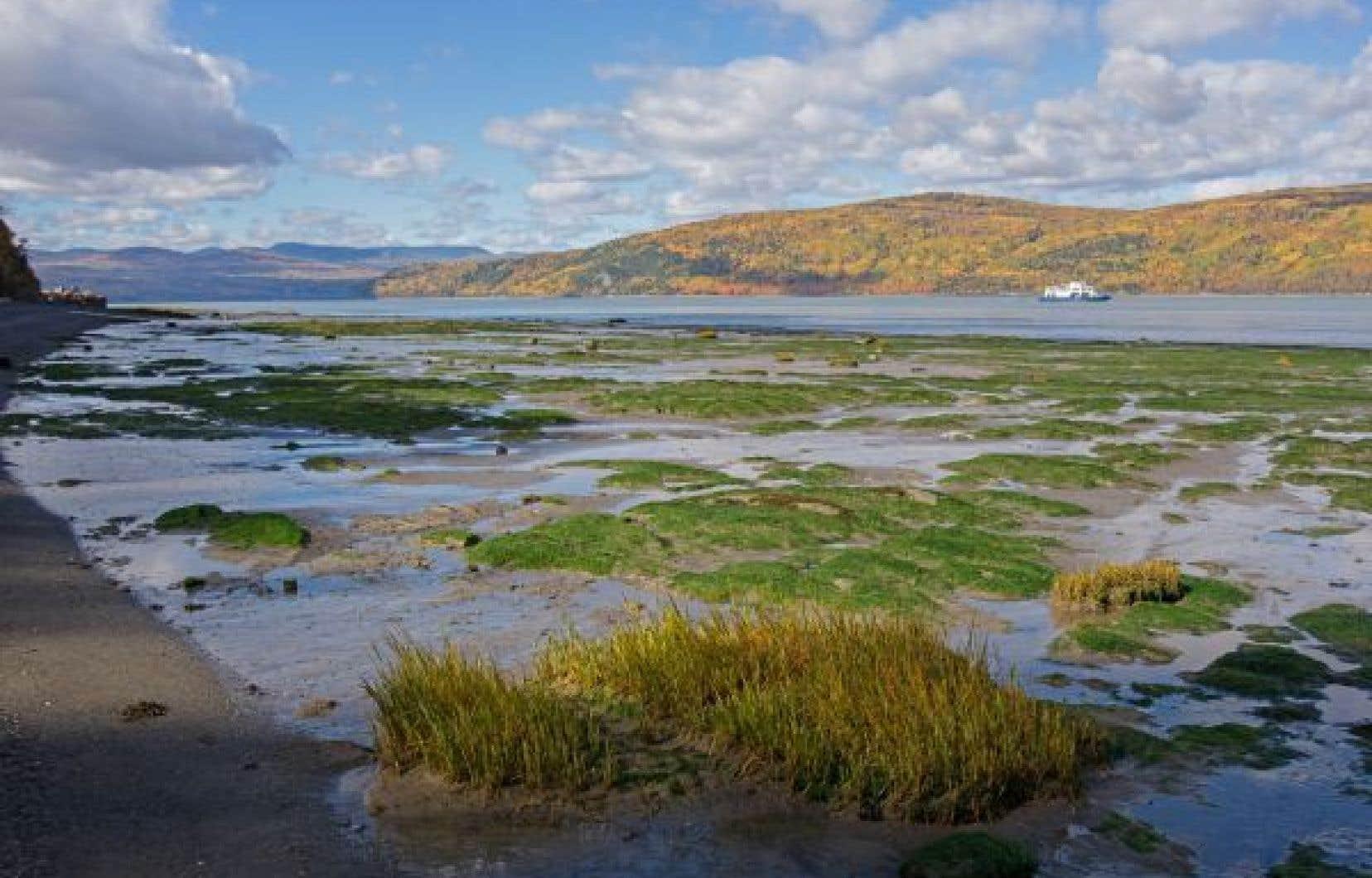 La chercheuse tente de déterminer  les processus climatiques et océaniques qui causent la raréfaction de l'oxygène dans les eaux.