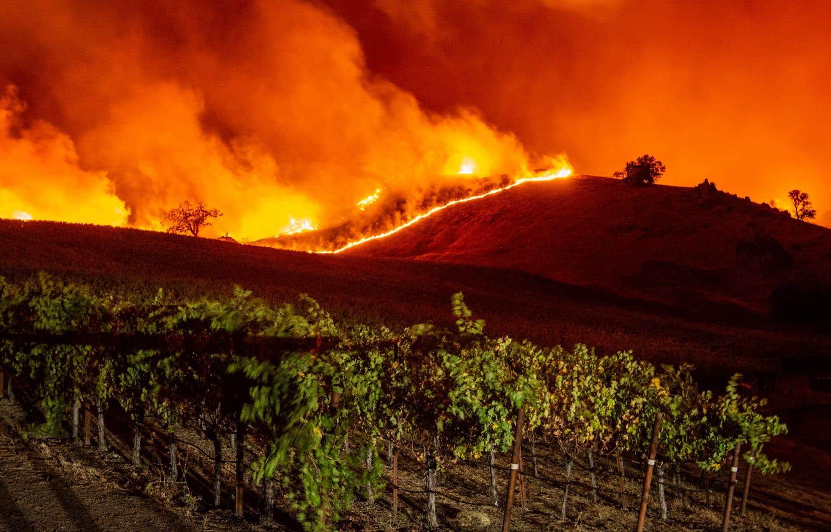 L'incendie <em>Kincade</em>, attisé par des bourrasques atteignant les 120 km/h, progresse rapidement.
