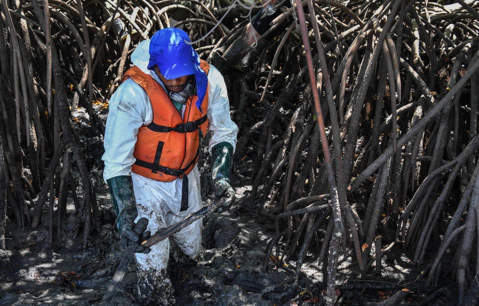 Un bénévole récupère des résidus de pétrole dans une mangrove àCabo de Santo Agostinho.