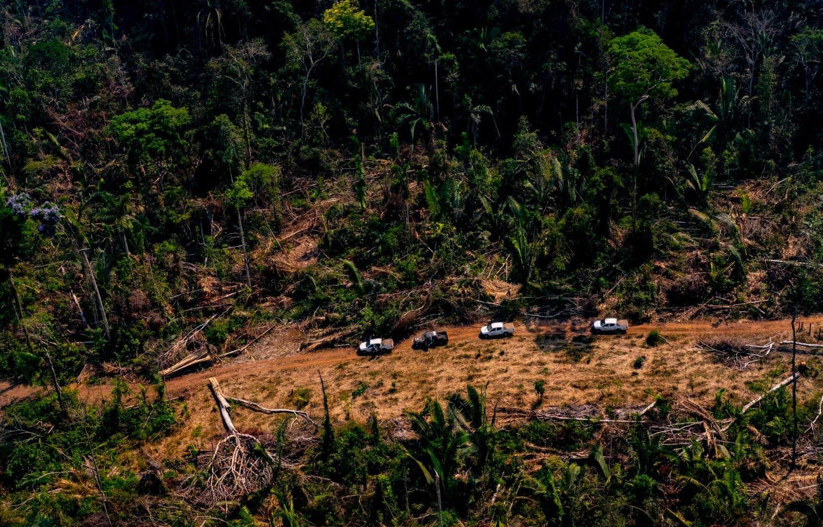 Selon des chiffres du Congrès missionnaire indien cités par l'APIB, 160 intrusions de trafiquants de bois ou d'orpailleurs illégaux ont été recensées de janvier à septembre cette année, en hausse de 44% par rapport au total de l'année 2018.