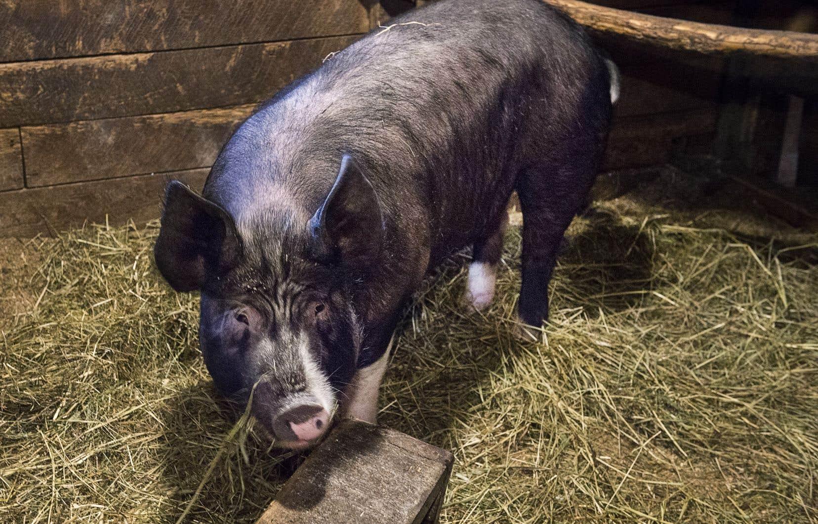 La valeur des exportations de l'industrie québécoise du porc à destination de la Chine était de 283 millions de dollars en 2018.