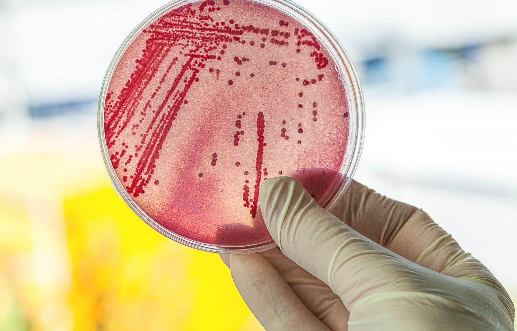 Les micro-organismes produisent des molécules à l'aide d'une série d'enzymes, que  le chercheur tente d'isoler afin d'en fabriquer synthétiquement pour remplacer  la chimie conventionnelle basée sur  le pétrole.