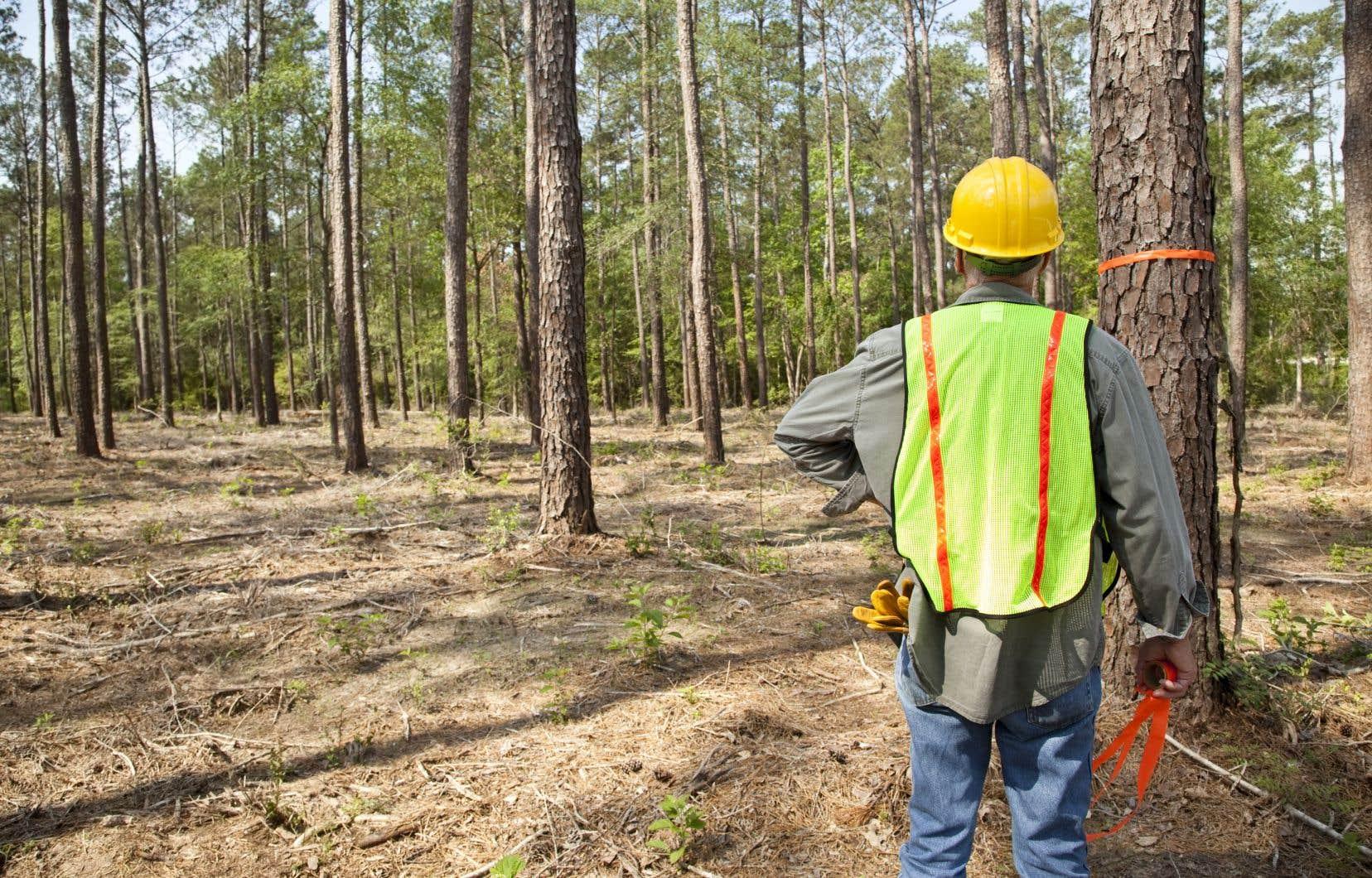 «Il est indispensable de reconnaître le rôle que jouent les ouvriers sylvicoles dans l'aménagement forestier et de leur assurer des conditions de travail décentes», affirment les auteurs.