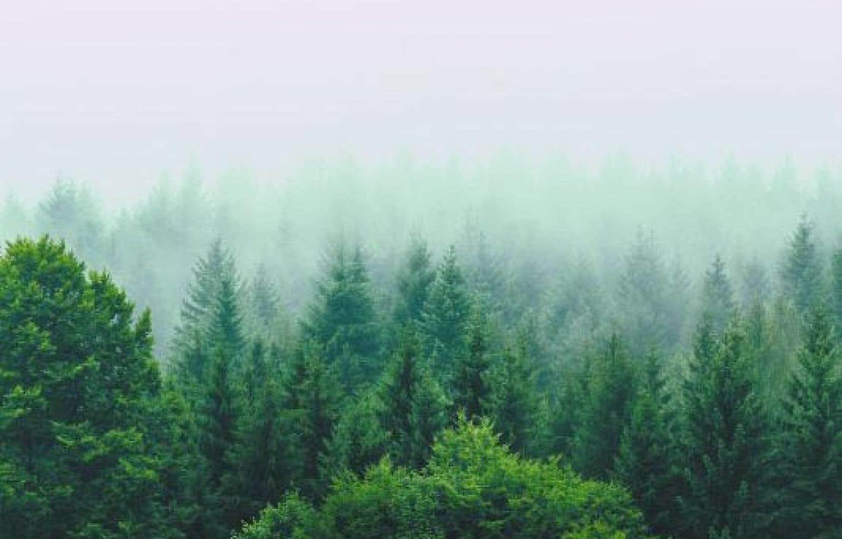 Un mètre cube de bois emprisonne environ une tonne de carbone.