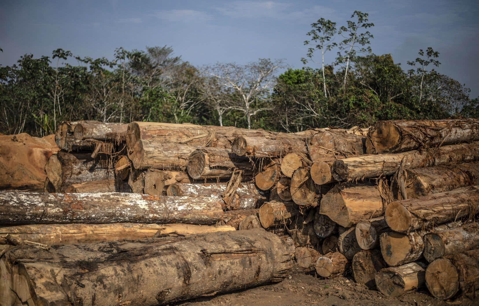 Au total, la plus grande forêt tropicale du monde a perdu 10100 km2 en un an, contre 7033 km2 entre août 2017 et juillet 2018.