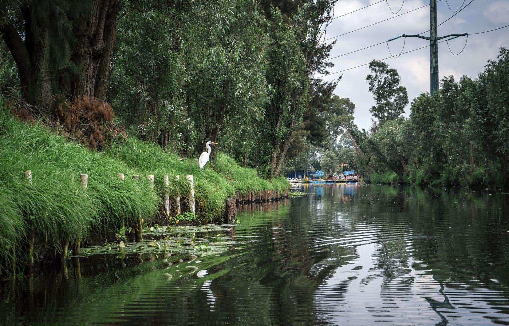Si l'étendue d'eau de Xochimilco venait à disparaître, la ville de Mexico perdrait une précieuse protection contre les changements climatiques.
