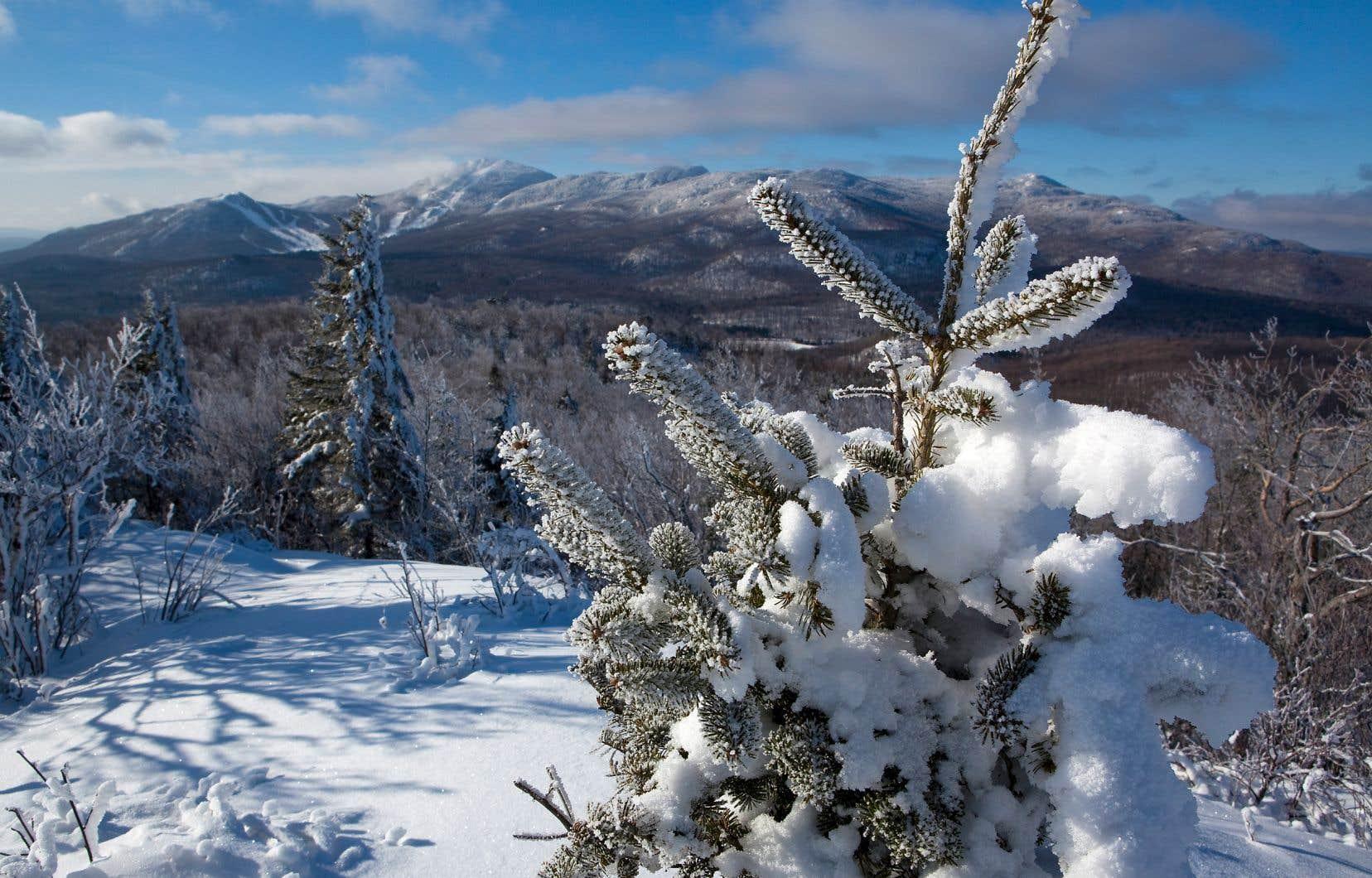 Mille choses à faire pour toute la famille: marche, raquette, glissade, ski de fond, trottinette des neiges, «fatbike», photo, pique-nique, observation d'oiseaux, contemplation...