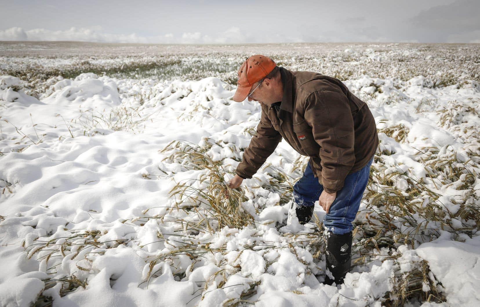 Les analystes estiment que l'urgence croissante du changement climatique pourrait entre autres influencer les choix de cultures des agriculteurs canadiens.