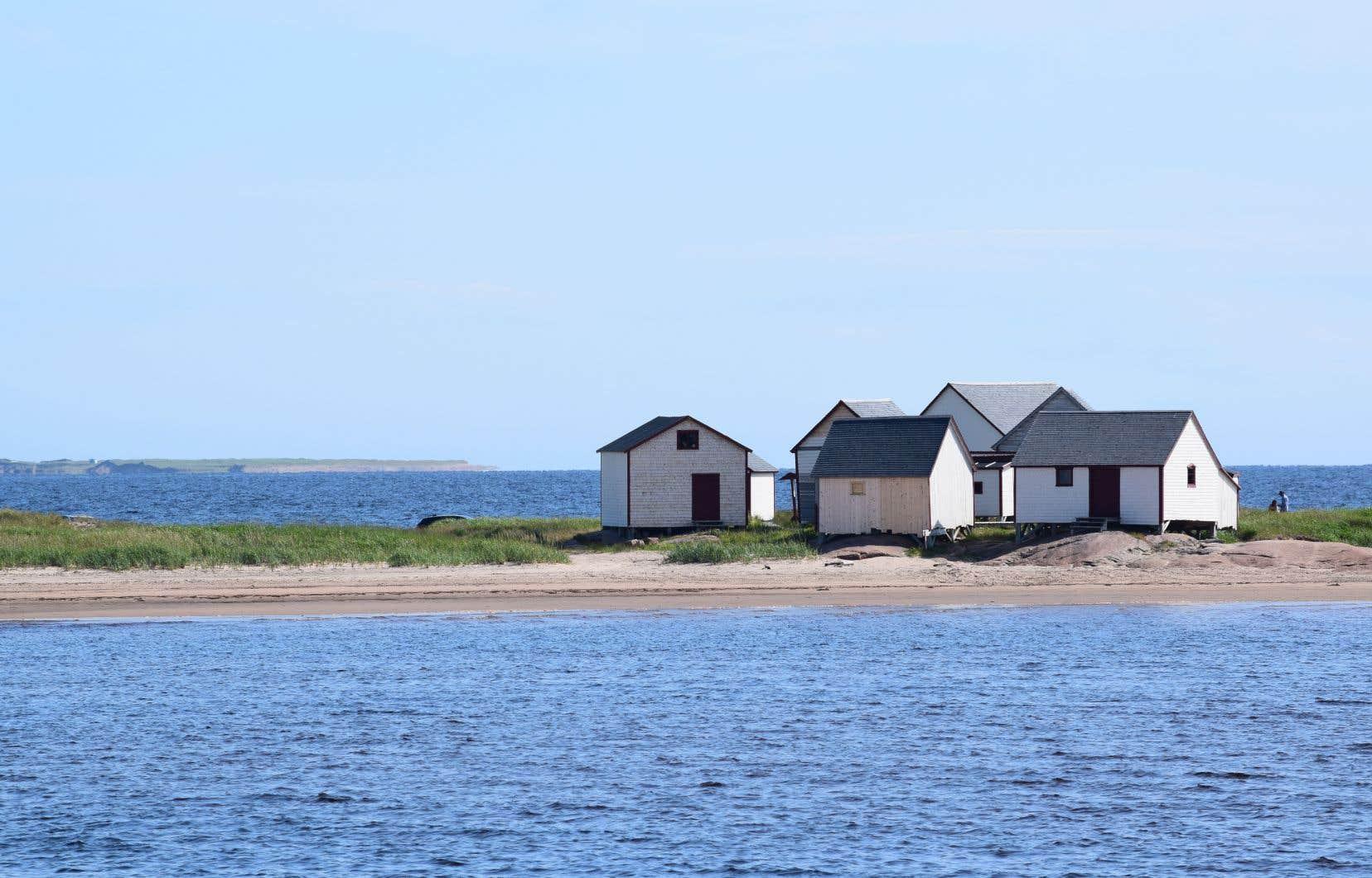Québec et Ottawa sont à pied d'oeuvre afin d'ajouter potentiellement plus de 5000km² de zones protégées dans l'estuaire du Saint-Laurent dès cette année, notamment pour protéger l'habitat de cétacés menacés.