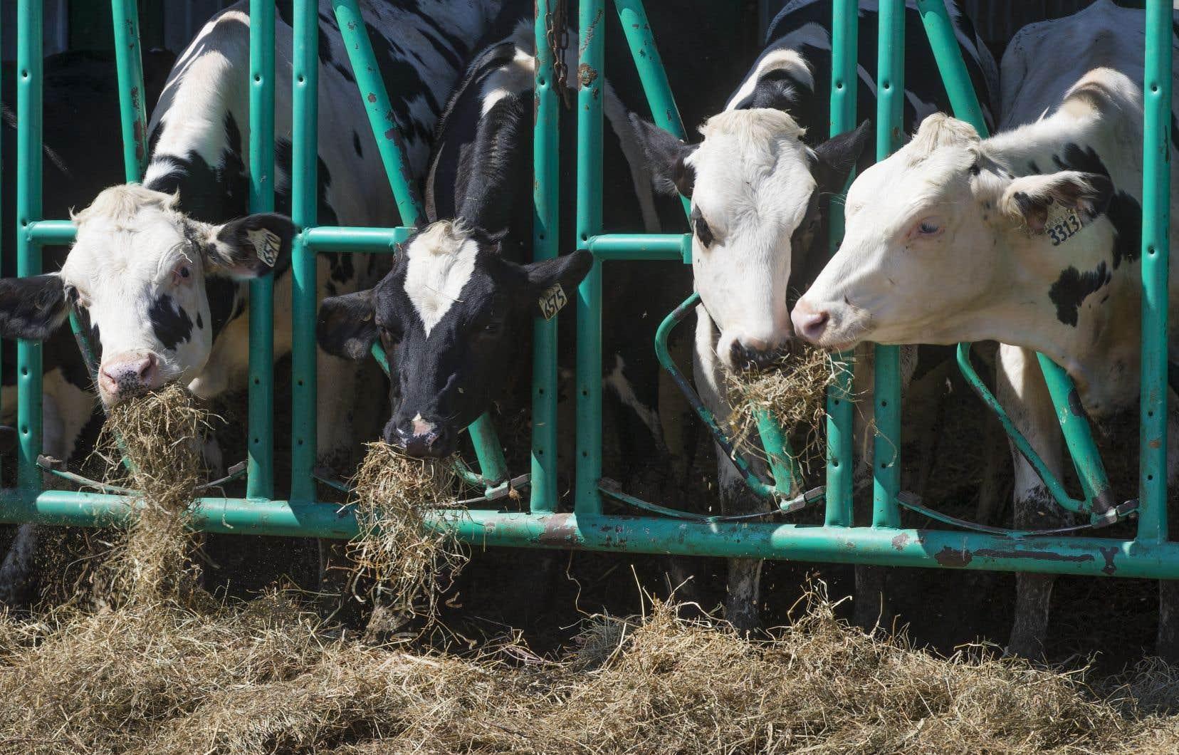 Même si la consommation de produits laitiers est en hausse de près de 20% la consommation de lait par habitant aux États-Unis a diminué de 40% par habitant depuis 1975.