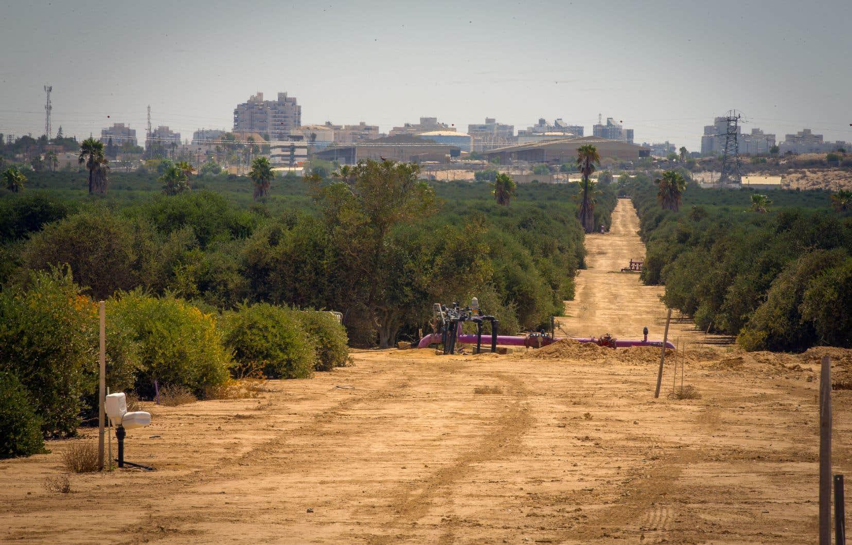 L'agriculture au goutte à goutte permet de faire pousser des plantes en milieu aride, comme cette plantation de jojoba en banlieue de Beersheva, dans le désert du Néguev, près de la frontière avec l'Égypte.
