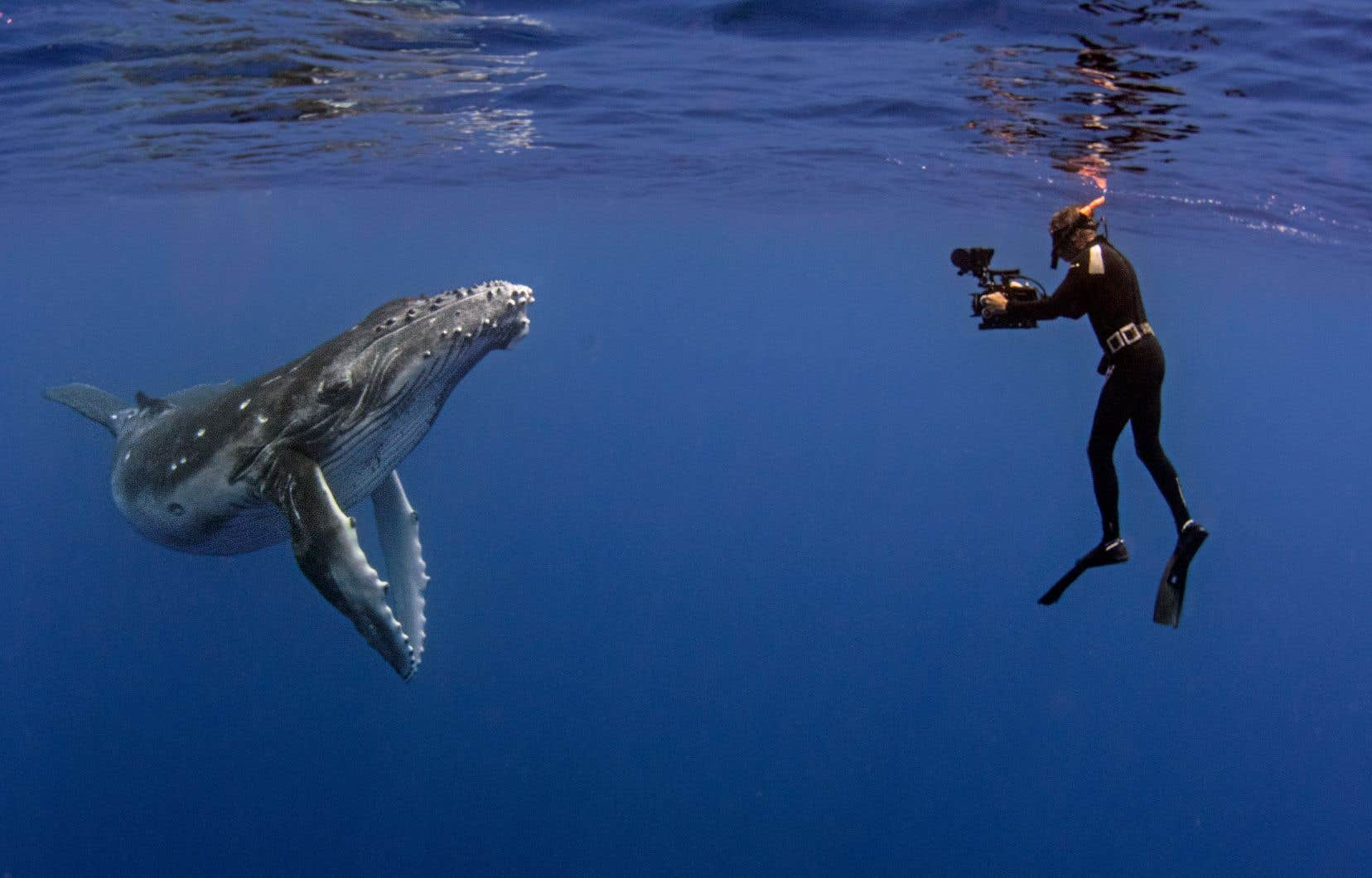 Scène de «Ma baleine à bosse»
