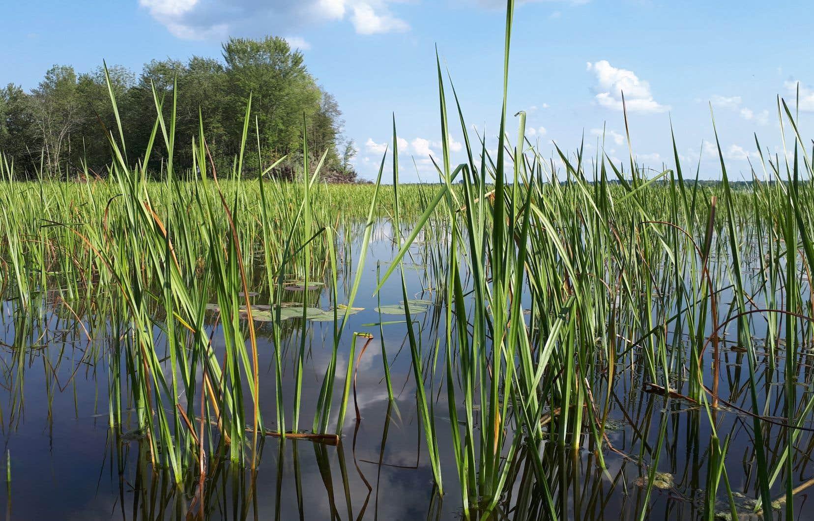 «Il s'agit de redonner à la nature ses fonctions initiales. De créer des zones tampons de rétention d'eau. C'est primordial pour tous les problèmes d'inondations qu'on vit en ce moment», explique Daniel Bergeron.