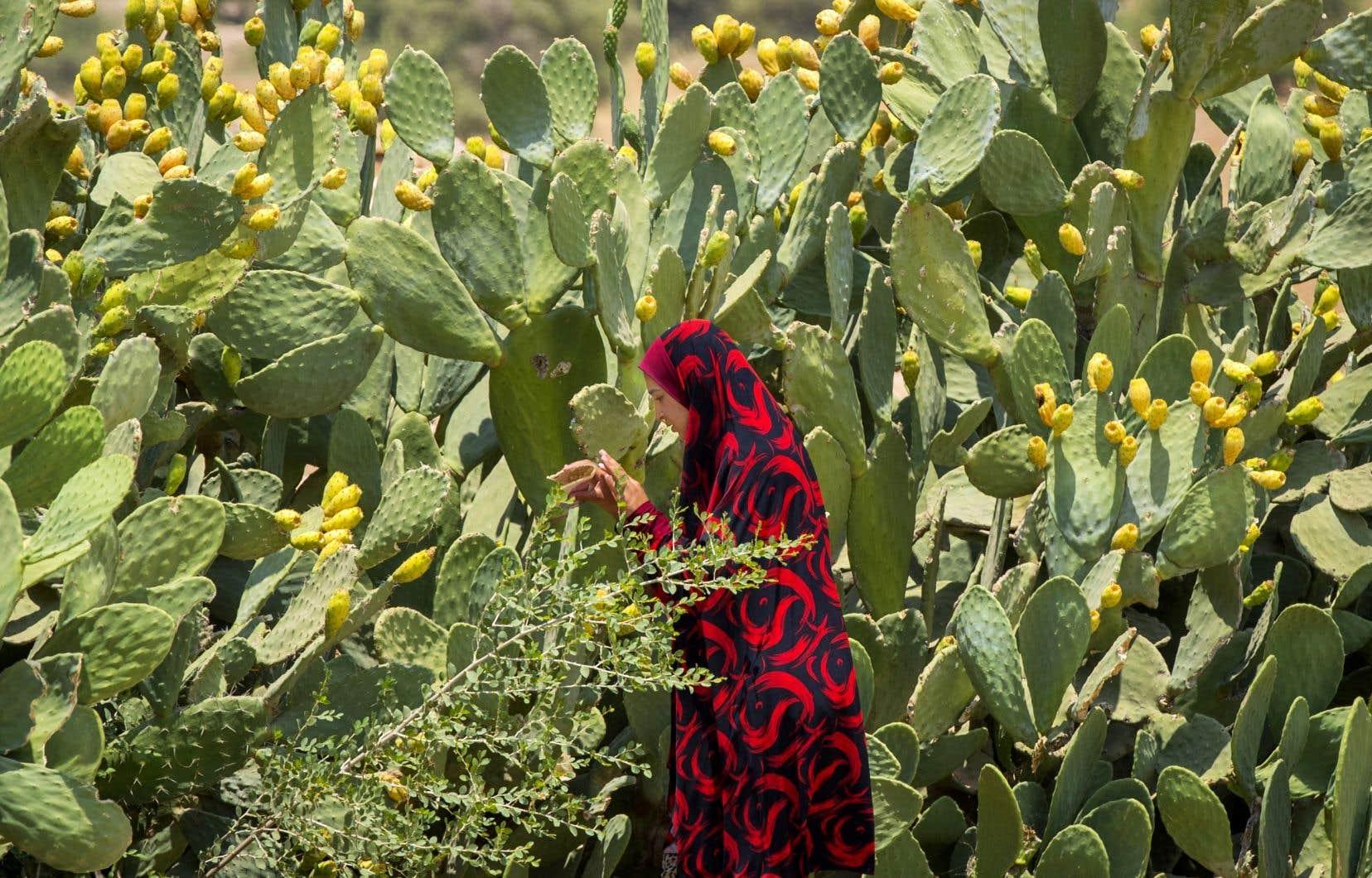 Les importations de produits agricoles israéliens dans les Territoires palestiniens ont avoisiné 600millions de dollars en 2018.