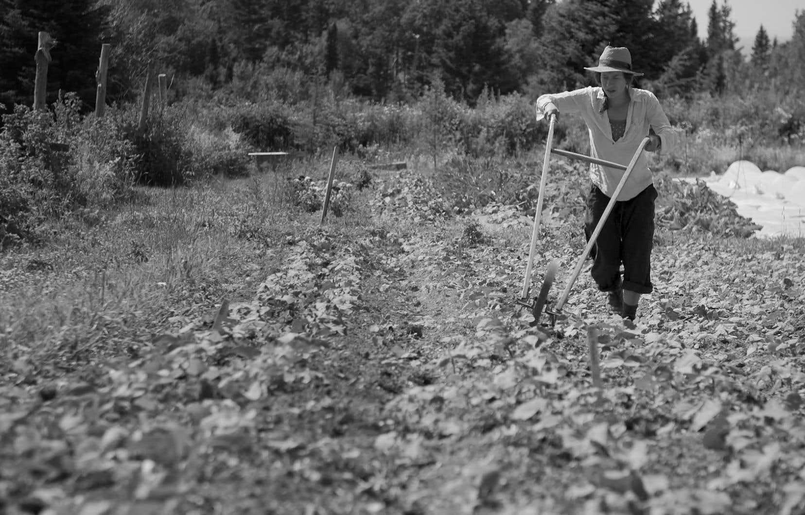 «Ramaillages», c'est six épisodes, tous en noir et blanc, qui se penchent sur le mouvement vers l'autonomie alimentaire et l'approche communautaire de citoyens de la Gaspésie de différentes générations.