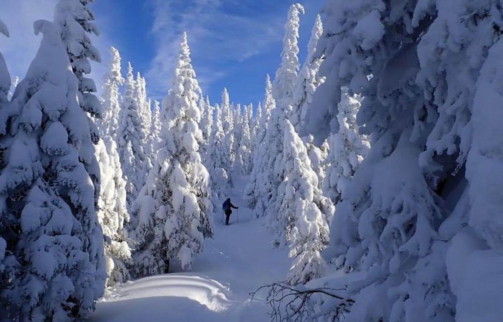 La vallée des Fantômes au parc national des Monts-Valin