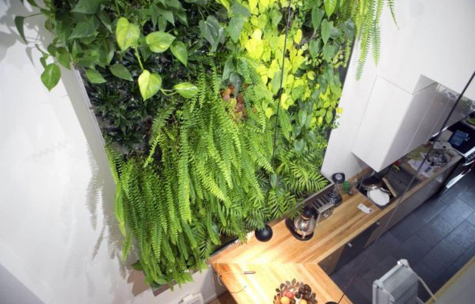L'aspect esthétique et décoratif des murs végétalisés est indéniable. En plus, ils ont la capacité d'épurer l'air, d'augmenter le pourcentage d'humidité dans nos maisons particulièrement sèches en hiver, d'exploiter des espaces restreints et d'améliorer la qualité de vie et le bien-être des occupants.