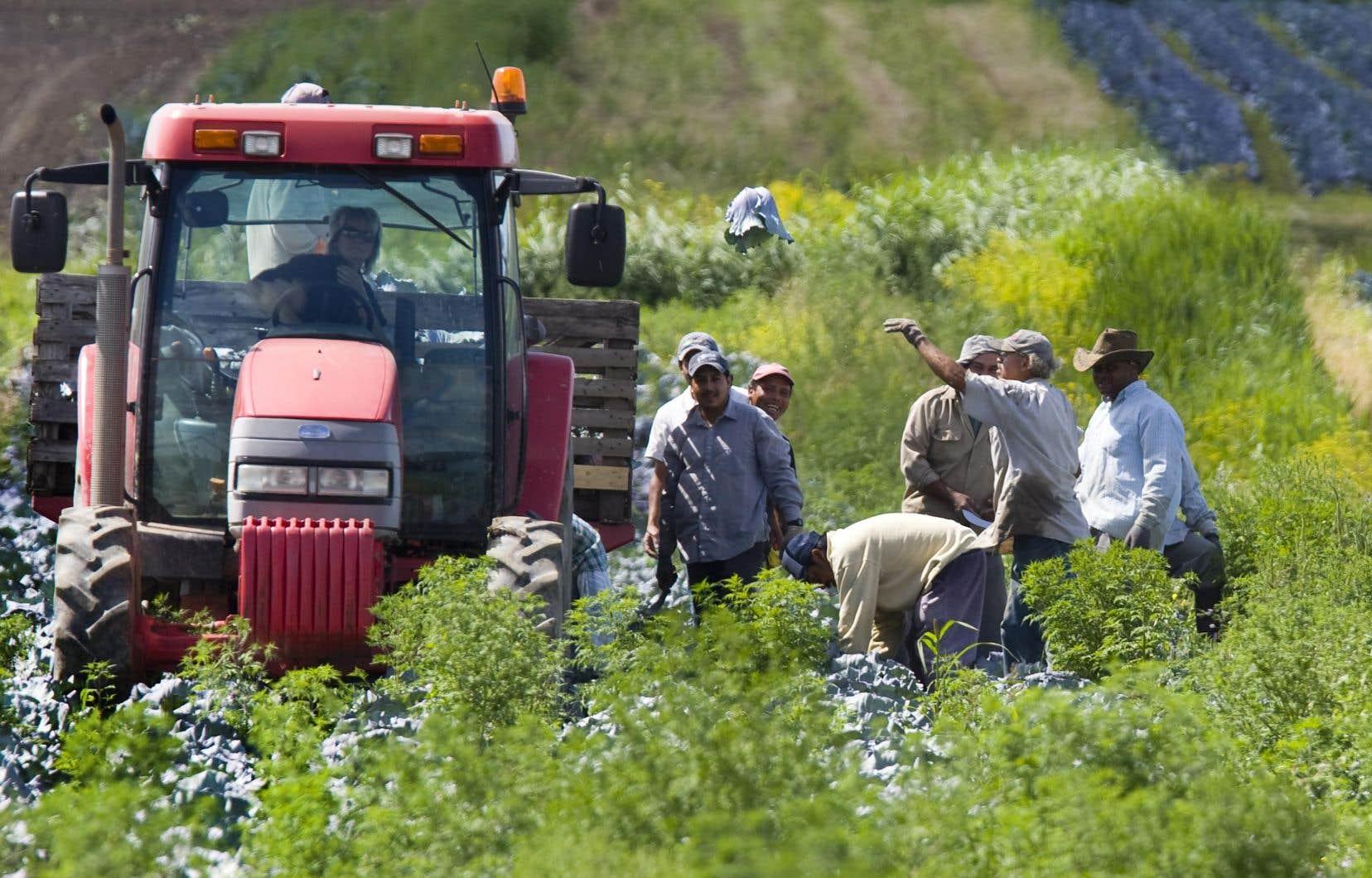 En été, 80% des fruits et légumes qui sont produits localement, rappelle l'UPA.