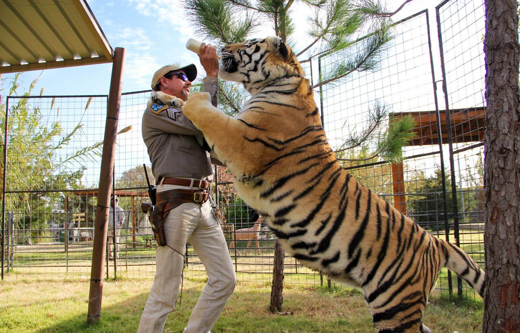 Joe Exotic est un propriétaire de zoo de l'Oklahoma «redneck, gay, polyamoureux». Avec une coupe Longueuil. Et croupissant en prison.