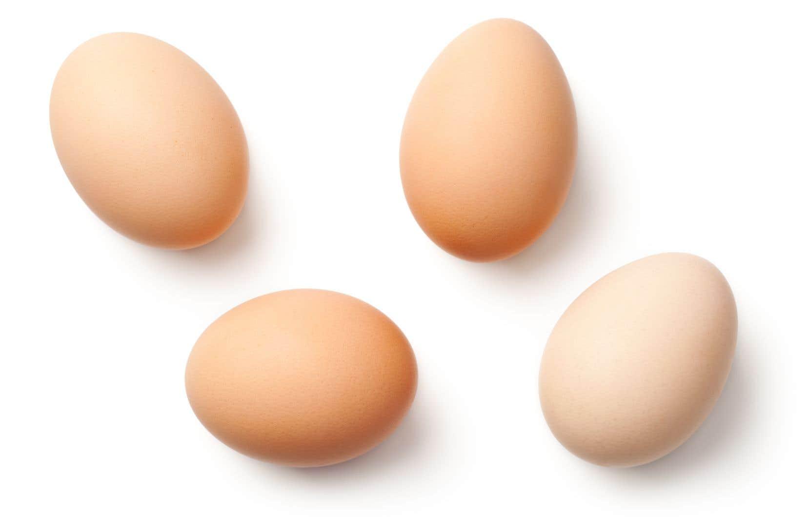 Depuis troisans, environ 50 villes au Québec ont légalisé l'élevage des poules.