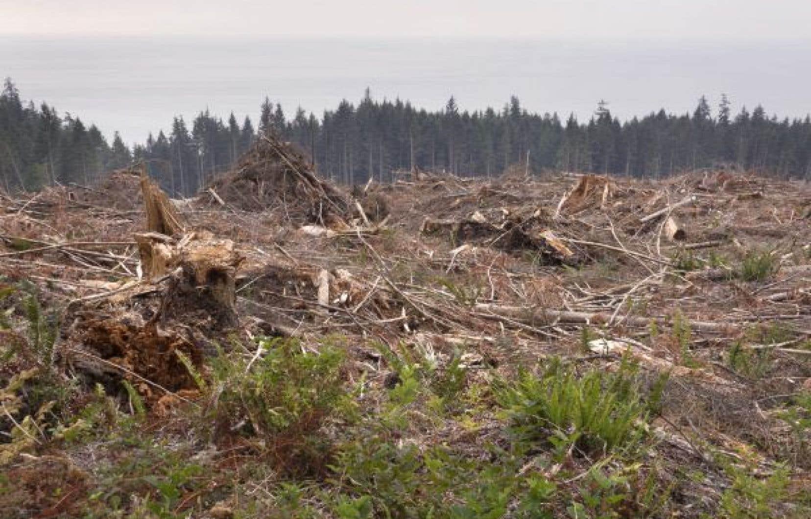 Plusieurs activités humaines détruisent à une vitesse inquiétante les habitats naturels de millions d'espèces animales à travers la planète.