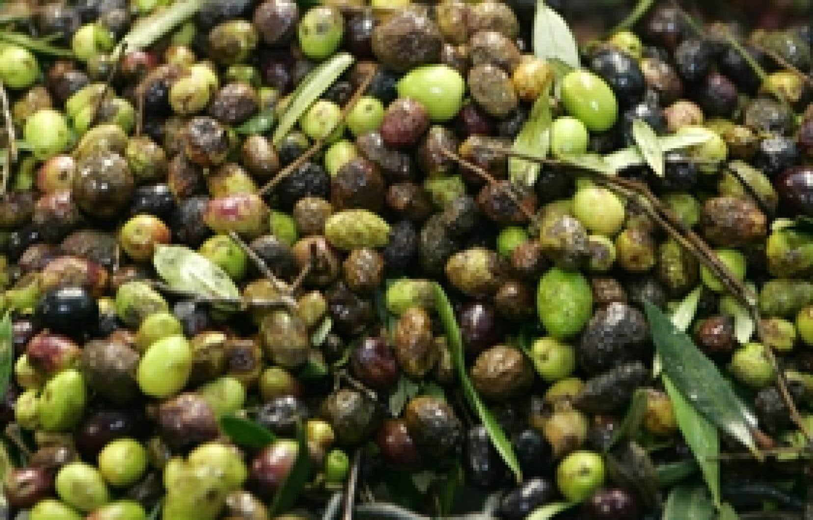 Variétés d'olives des Baux de Provence donnant l'une des précieuses huiles à la base de la cuisine méditerranéenne.