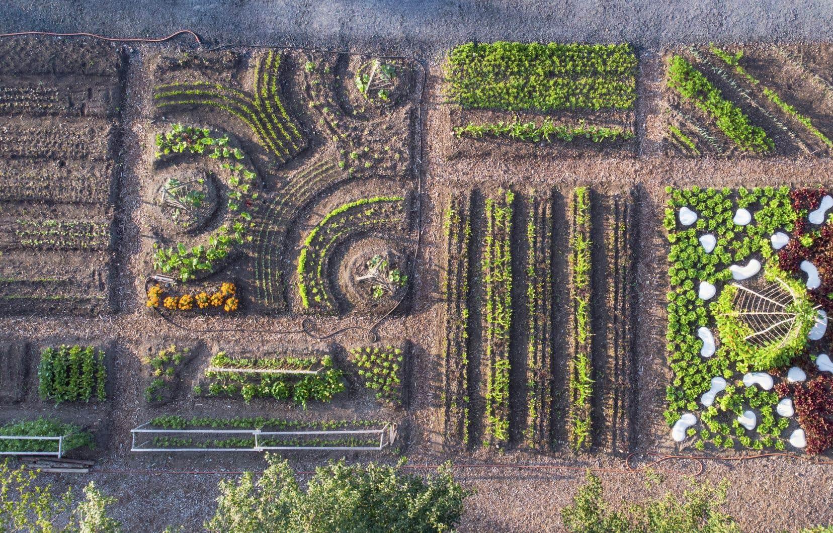 Depuis plus de 20ans, les Jardins de Métis ont invité 200 créateurs et artistes du monde entier à concevoir une centaine de jardins contemporains alliant installations artistiques et horticulture.
