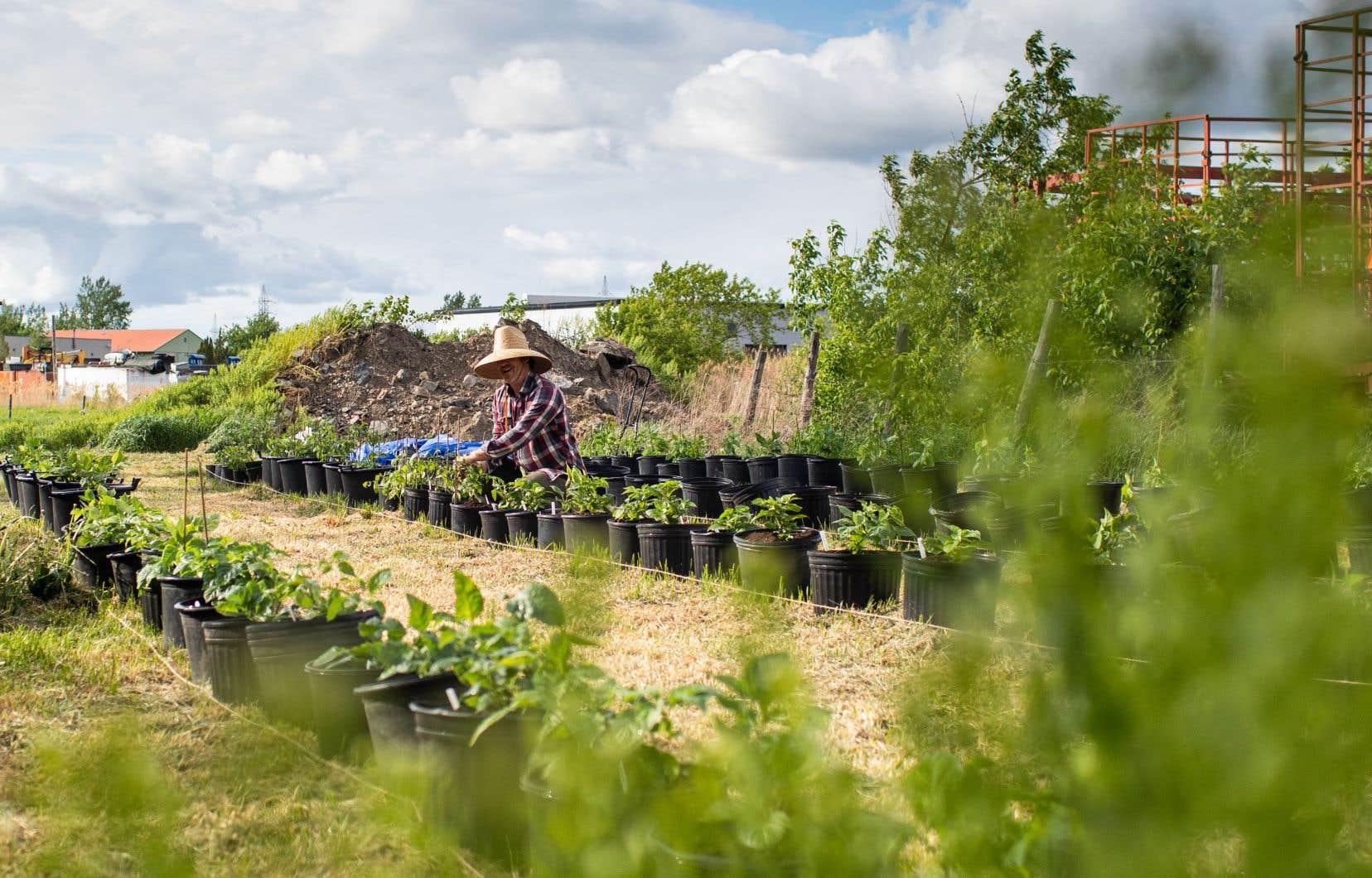 Un agriculteur a prêté à Fabrice Gaëtan une terre à Sainte-Julie pour qu'il puisse vivre pleinement sa nouvelle passion.
