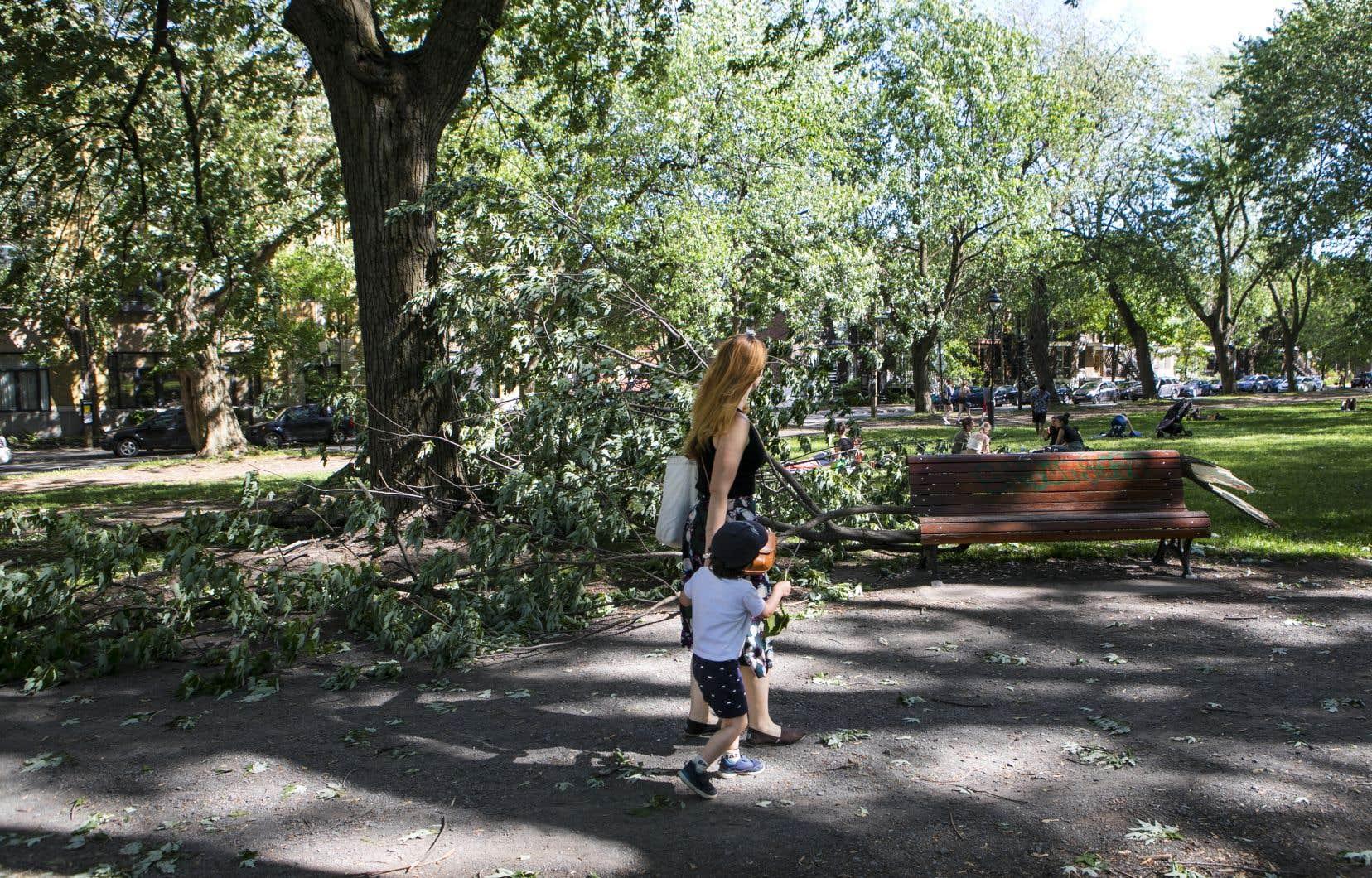 Les vents violents ont endommagé ou déracinés de nombreux arbres à Montréal, notamment dans le parc Laurier.