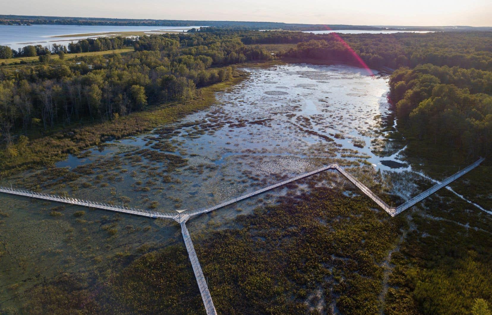 Le sentier La Zizanie-des-Marais, dans le parc national de Plaisance, en Outaouais