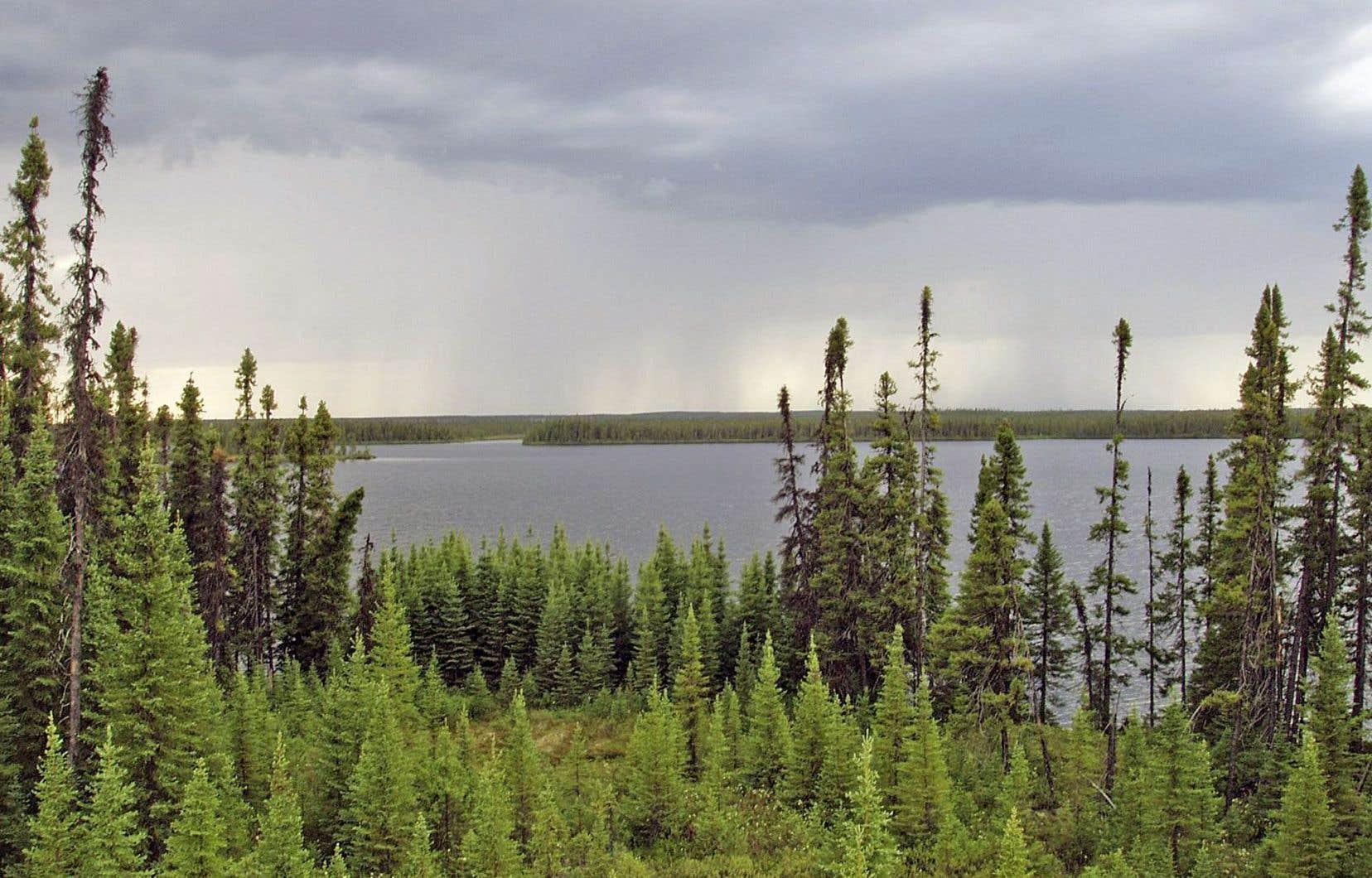 Bon nombre des outils de recherche et des connaissances sur les incendies de forêt au Canada datent de plusieurs décennies déjà, ce qui rend le comportement du feu dans les denses forêts boréales du pays plus difficile à prévoir de nos jours.