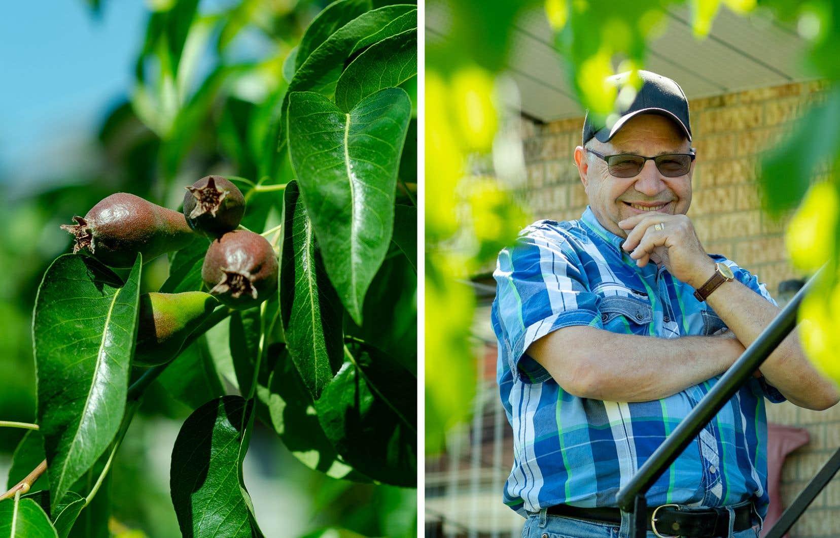 José Neves dans sa cour arrière, où sa femme et lui font pousser légumes, arbres fruitiers et fines herbes.