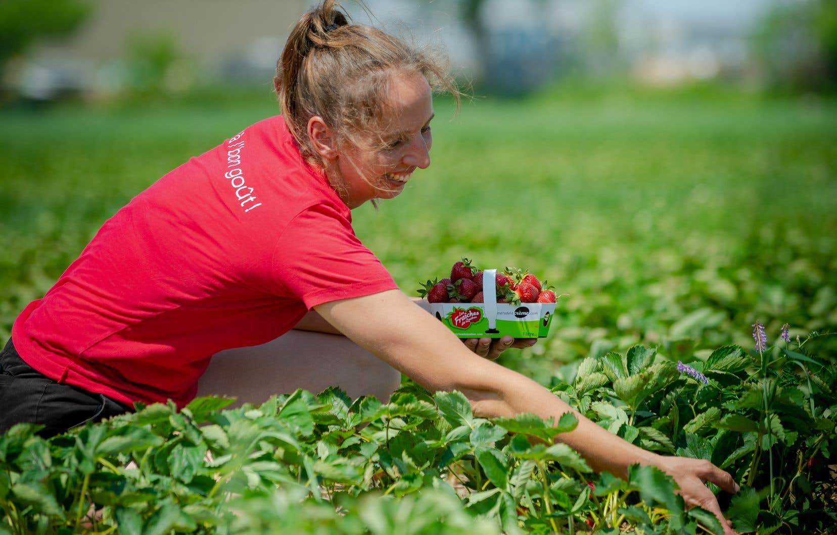 Josiane Cormier, dans un champ de fraises, où l'autocueillette est possible depuis peu