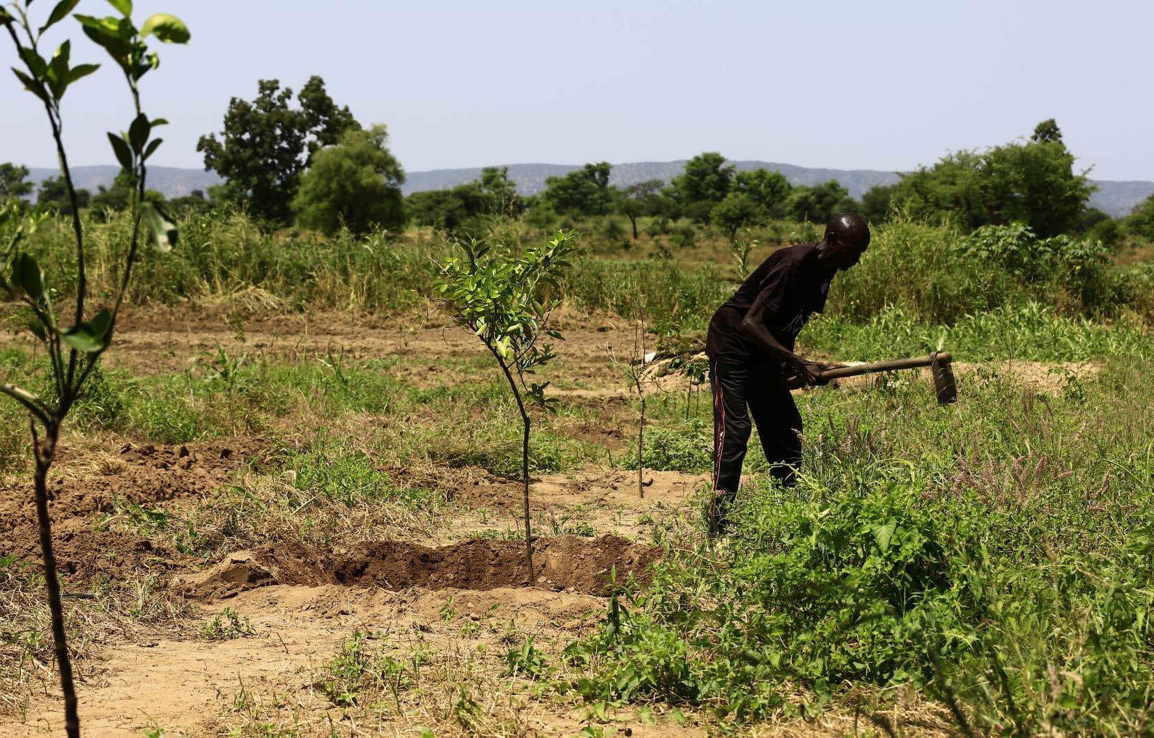Au Darfour-Ouest, la question des terres et de l'eau demeure sensible. Sur cette image, un fermier venant de revenir sur ses terres au terme d'un accord avec le gouvernement.