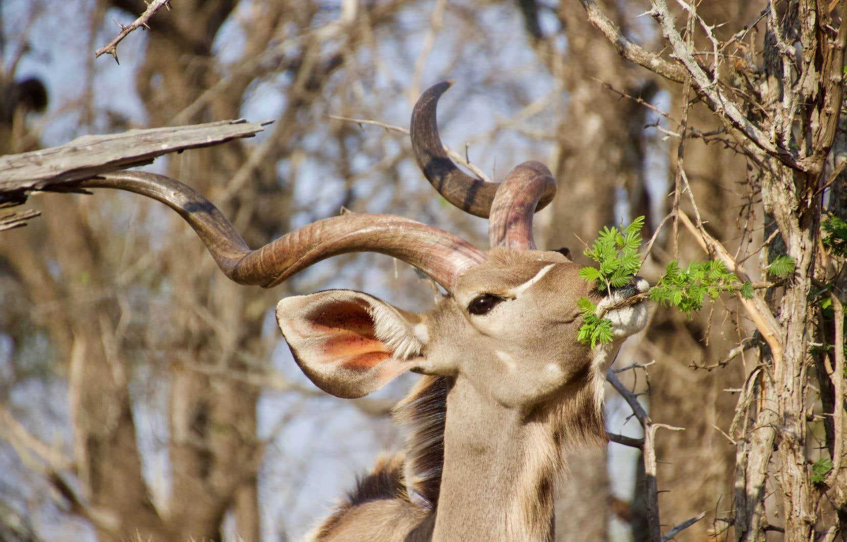 Observer des animaux est une activité apaisante, car elle stimulerait  la production de l'ocytocyne, hormone de l'attachement.