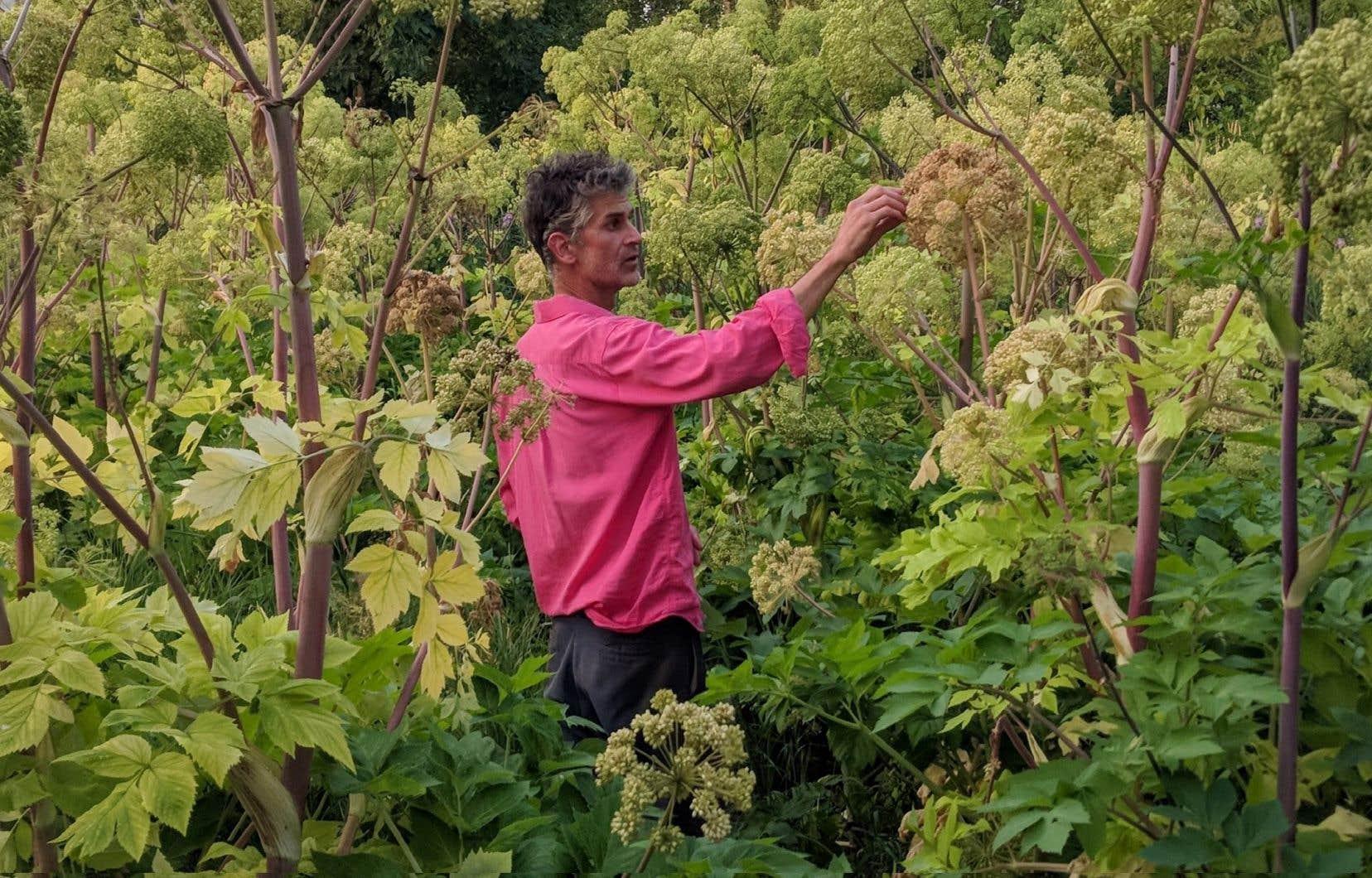 Patrice Fortier dans son jardin à Kamouraska, où les végétaux n'en font qu'à leur tête.