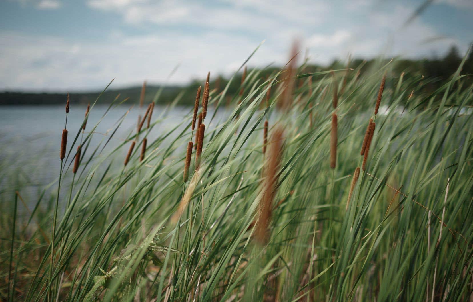 Le Bti qu'on pulvérise dans les marais, les étangs, les fossés, les ruisseaux et les embouchures des lacs au Québec comprend 80% d'additifs, de la cochonnerie pour nos poissons, nos grenouilles, nos tortues… et les baigneurs!