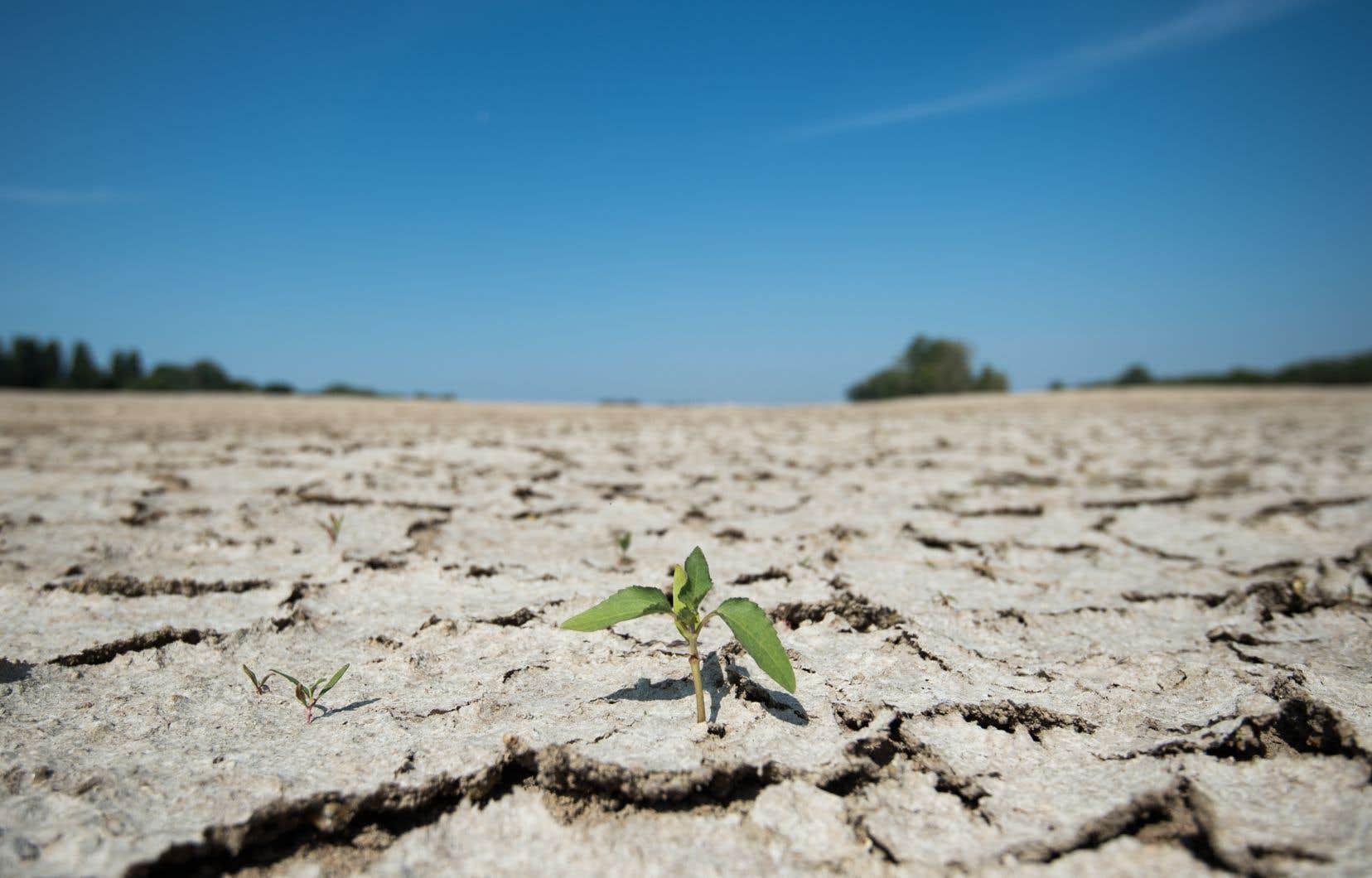 Les conséquences des mesures de confinement à long terme sur le climat serait négligeable puisqu'elles n'engendreront qu'un rafraîchissement de 0,01 °C en 2030.