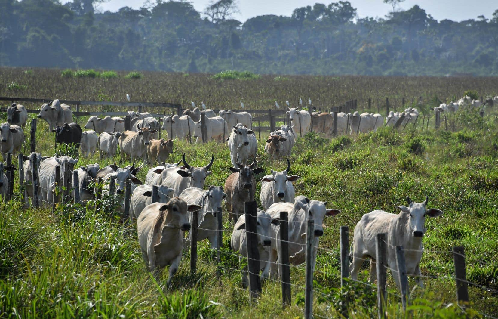 La traçabilité demeure l'enjeu le plus important pour éviter que les géants agroalimentaires s'approvisionnent dans des élevages liés à la déforestation.