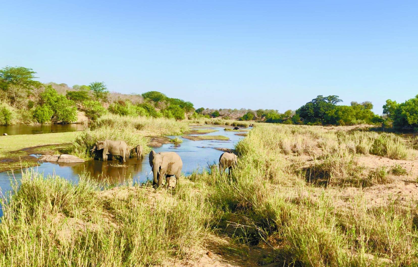 Une expérience de safari écoresponsable dans une concession privée du parc national Kruger, en Afrique du Sud, avec Voyageurs du Monde Canada