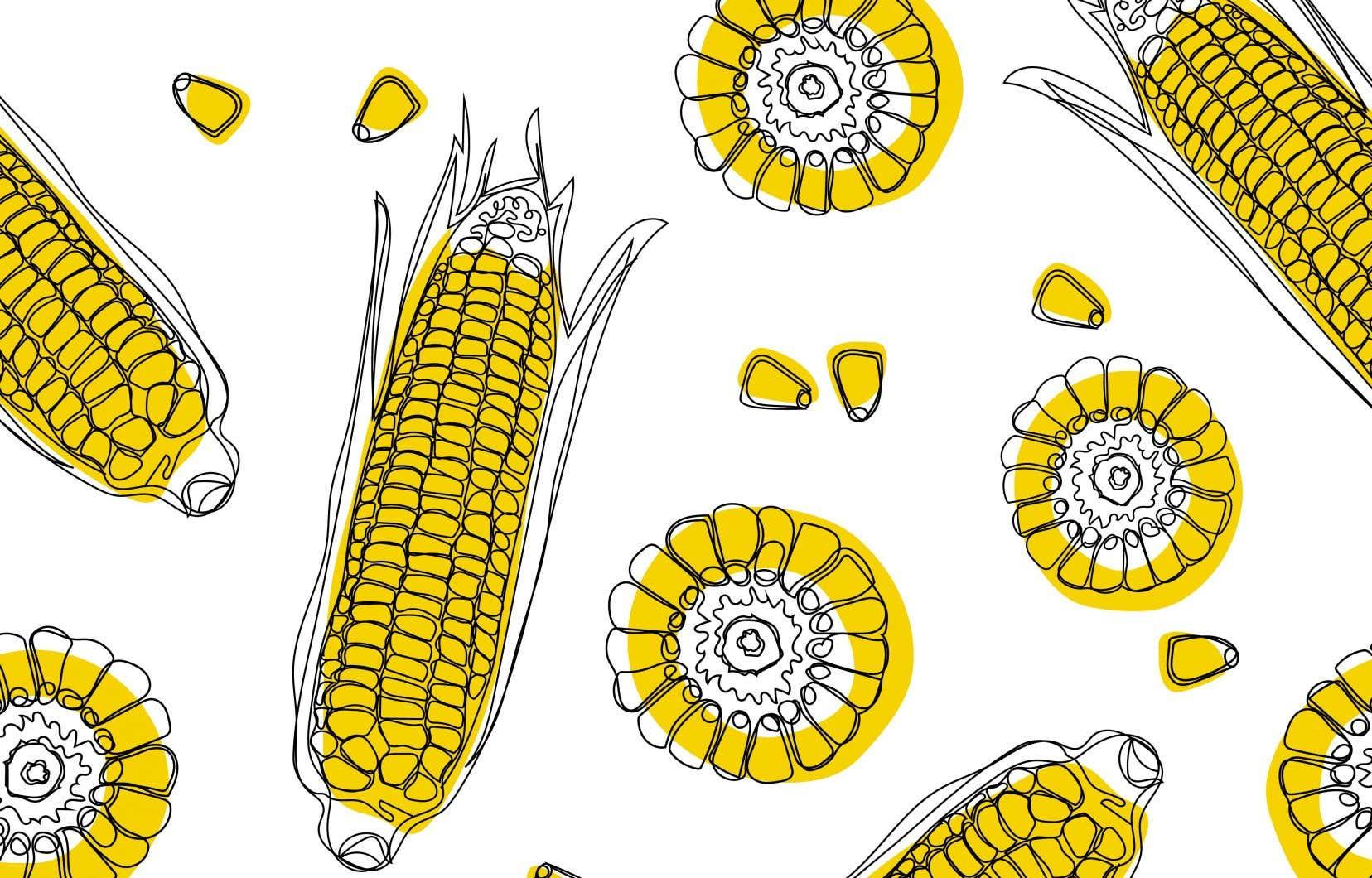 Le maïs, originaire d'Amérique centrale, est consommé en Amérique du Nord depuis plus de 3000 ans.