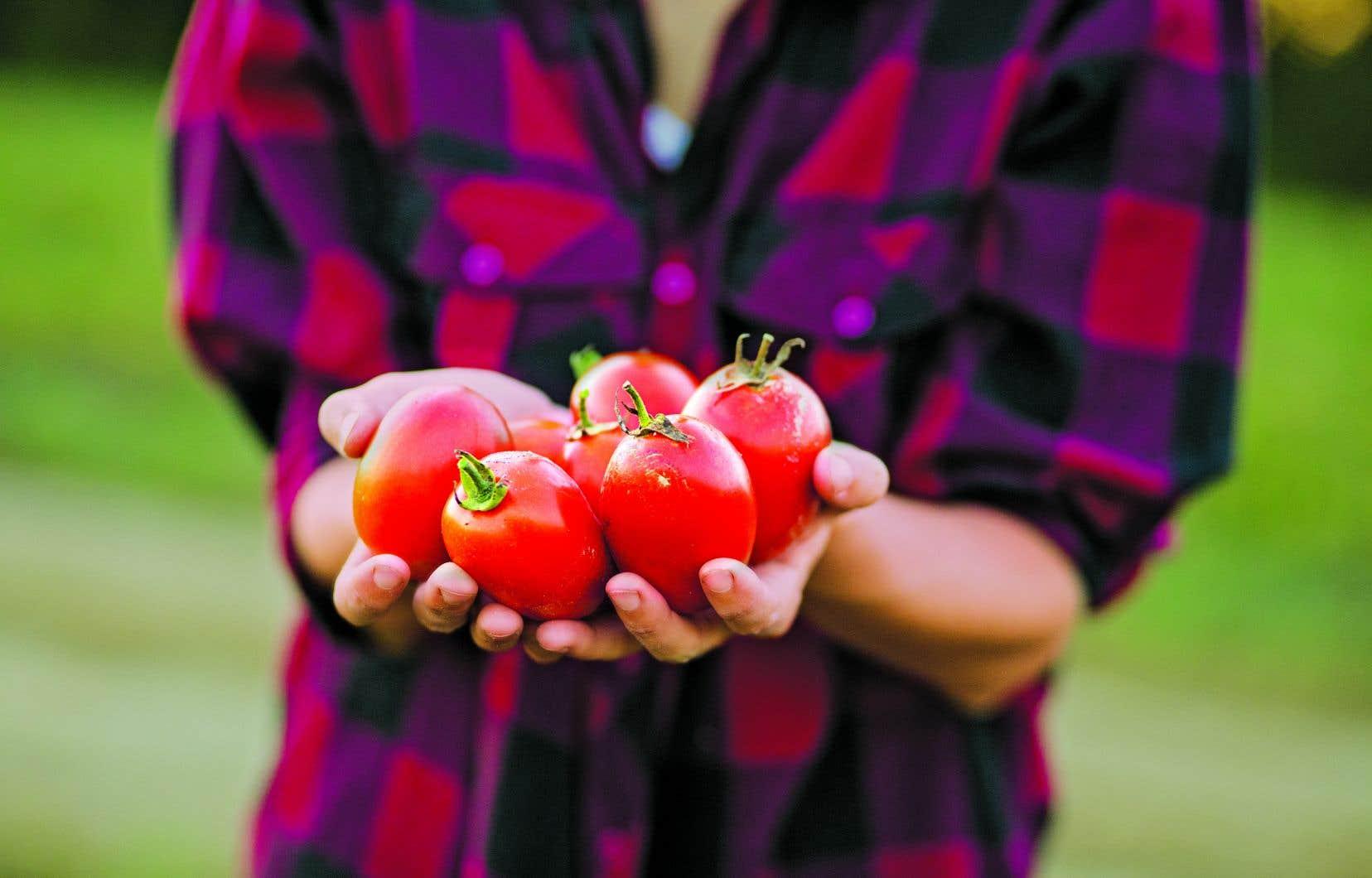 Lorsque les récoltes battent leur plein, c'est le temps de les mettre au menu sans modération, mais aussi d'en profiter pour faire quelques provisions.