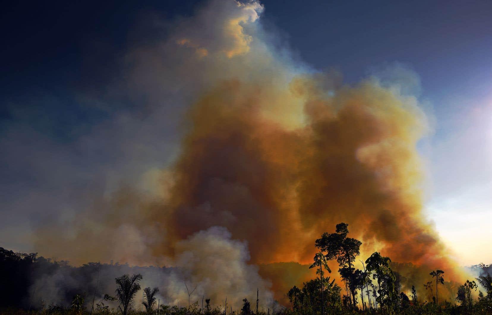 Les ranchs de bétail sont responsables d'une grande partie de la destruction de la forêt amazonienne, que l'on défriche pour faire place à plus de pâturages. De nombreux incendies auraient été provoqués illégalement par des éleveurs pour avoir accès à encore plus de terres.