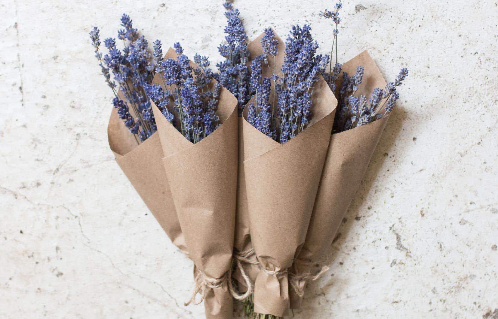L'entreprise Jungle Fleur propose des mini bouquets de lavande qu'on a envie de mettre partout dans la maison parce qu'ils sont aussi beaux qu'odorants.
