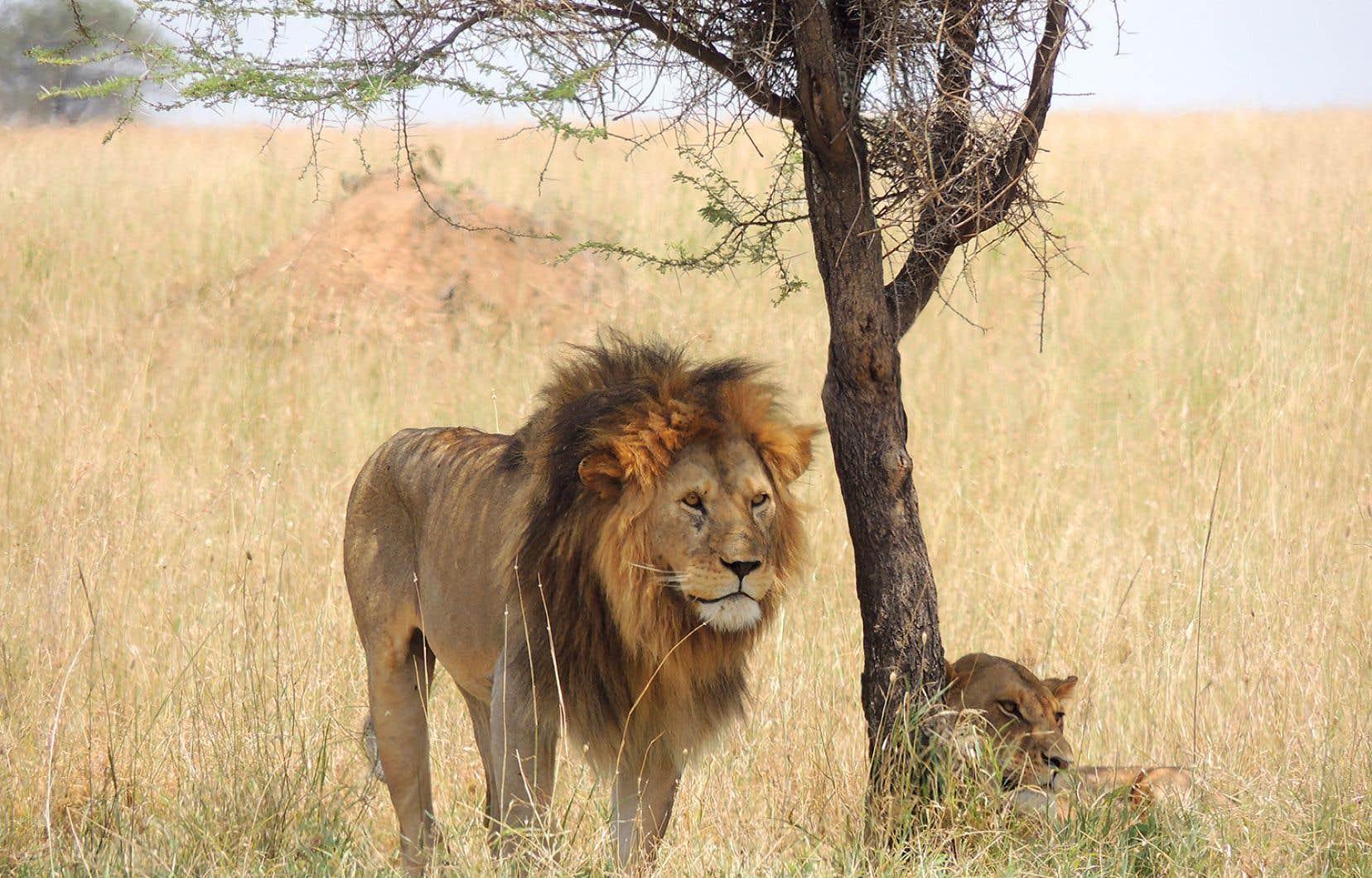 Image tirée du film <em>Michel en Tanzanie</em>