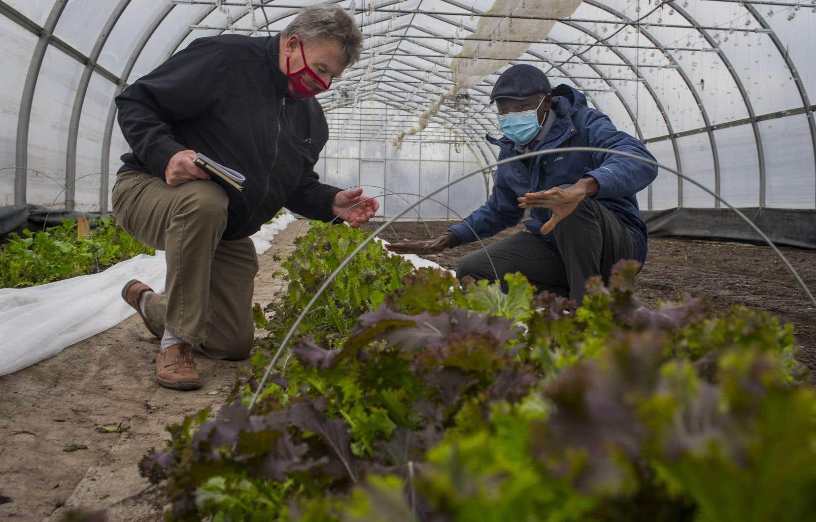 Guy Hébert et Issiaka Sanou, respectivement président et directeur général de la Coopérative de solidarité Les Serres du Dos blanc. Pour la première fois, il leur sera possible de cultiver des légumes toute l'année.