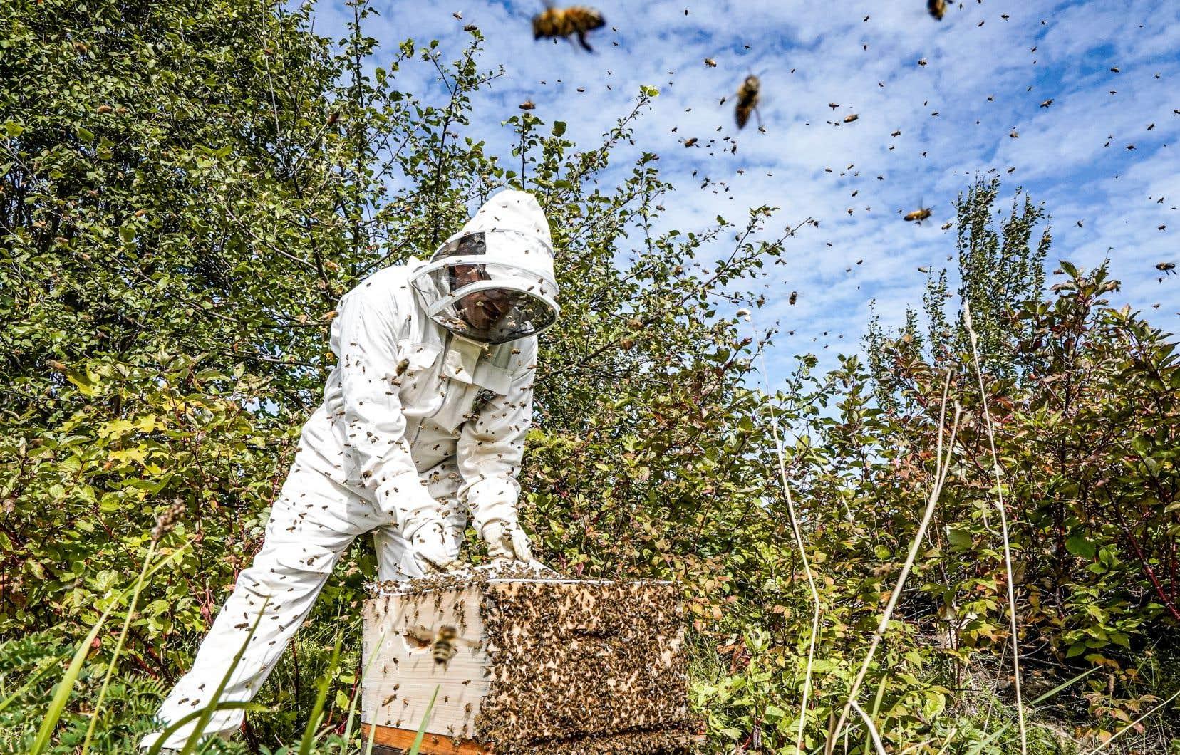Dans les trois prochaines années, la population de la Haute-Gaspésie devrait voir apparaître, par exemple, des ruches écologiques.