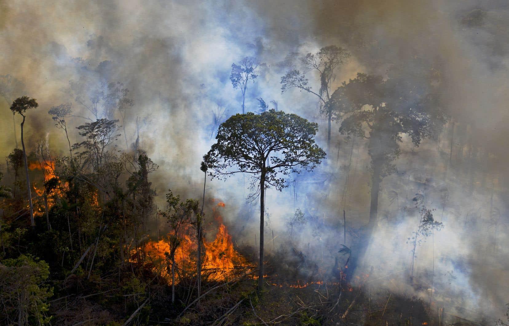 Lors du seul mois d'août 2020, la déforestation a touché une surface plus grande que celle de la Jamaïque, un record sur 12ans, selon l'INPE. Sur la photo, un incendie dans l'État de Para, en août 2020.